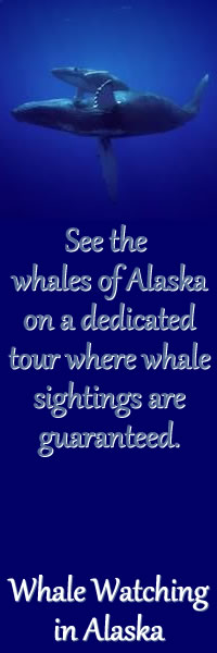 Whale Watching in Alaska.